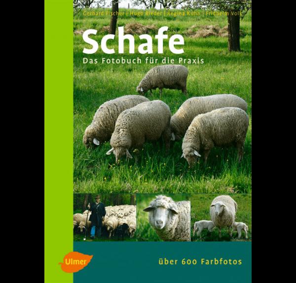 Schafe/Fotobuch/Fischer/Ulmer