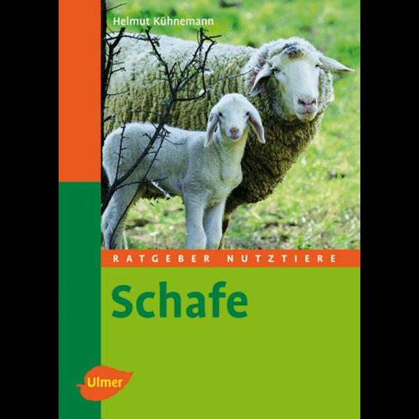 Schafe / UV